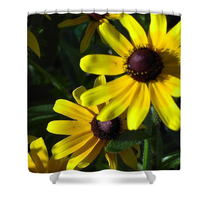 Charity Shower Curtain featuring the photograph Black Eyed Susan by Mary-Lee Sanders