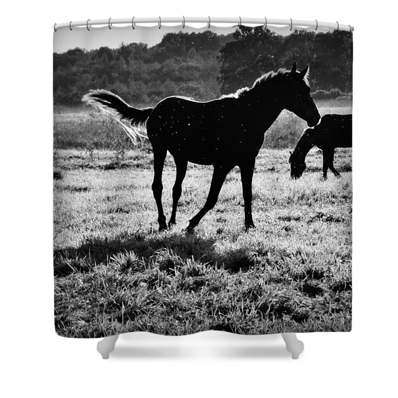 Animal Shower Curtain featuring the photograph Black Horse. by  larisa Fedotova
