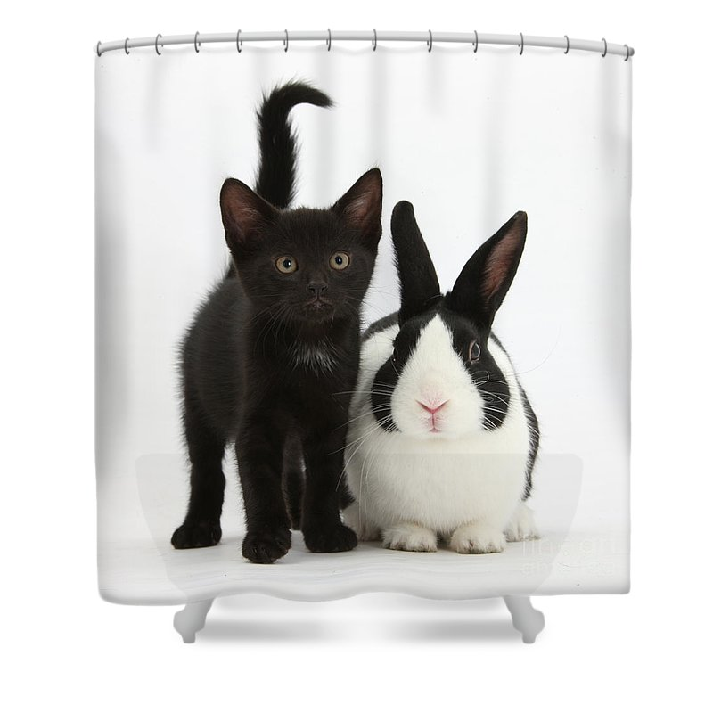 Nature Shower Curtain featuring the photograph Black Kitten And Dutch Rabbit by Mark Taylor