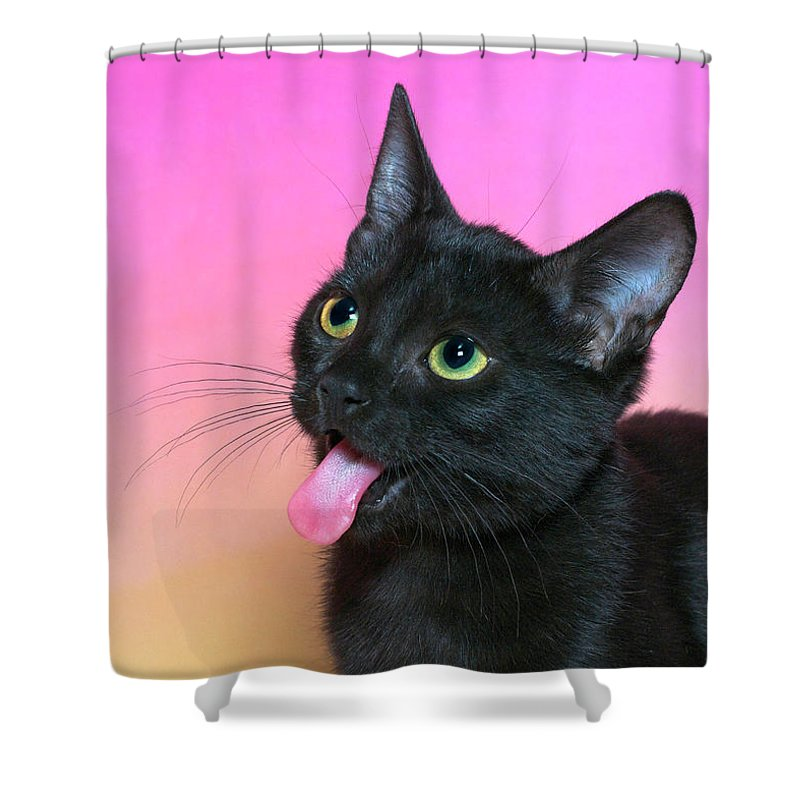 Cat Shower Curtain featuring the photograph Black Kitten Says Yuck by Sheila Fitzgerald