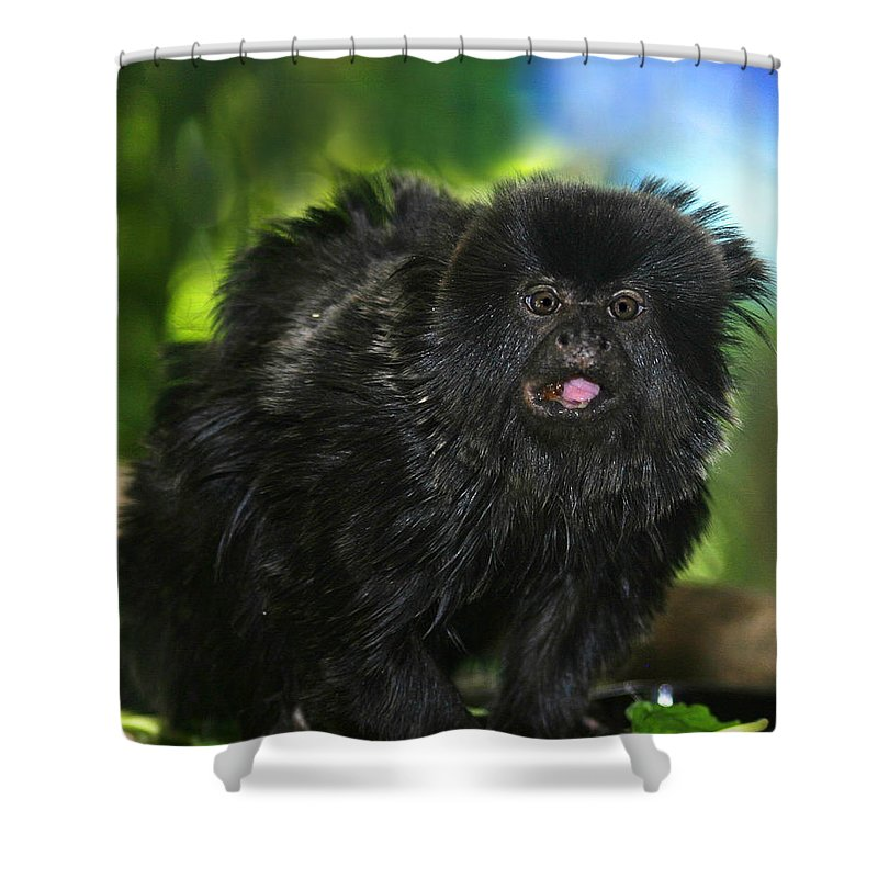 Wildlife Shower Curtain featuring the photograph Black Marmoset by Anthony Jones