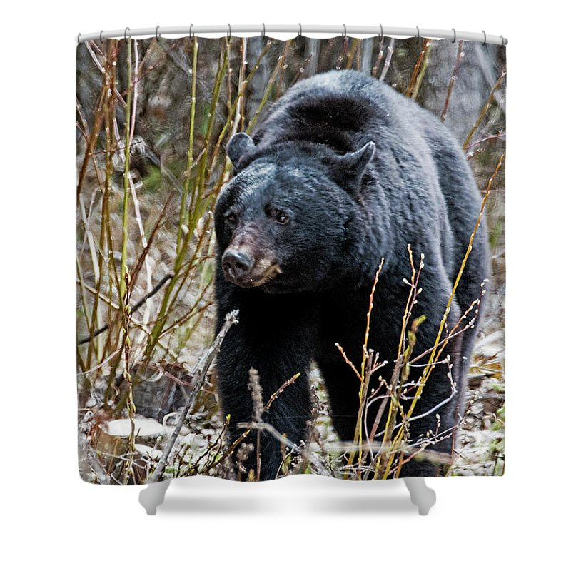 Black Bears Shower Curtain featuring the photograph Black Path by Eric Nelson