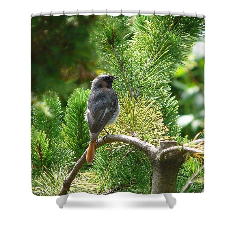 Bird Shower Curtain featuring the photograph Black Redstart by Valerie Ornstein
