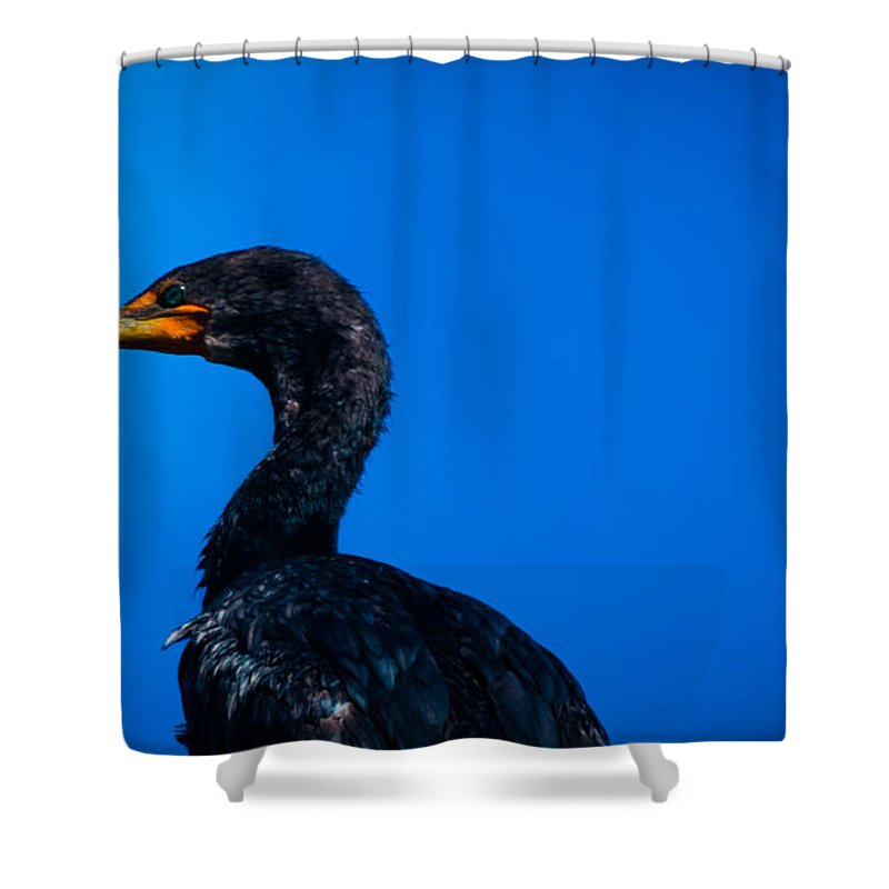 Back Sea Birds Shower Curtain Featuring The Photograph Black Bird Cape Cod By Troy DeTerra