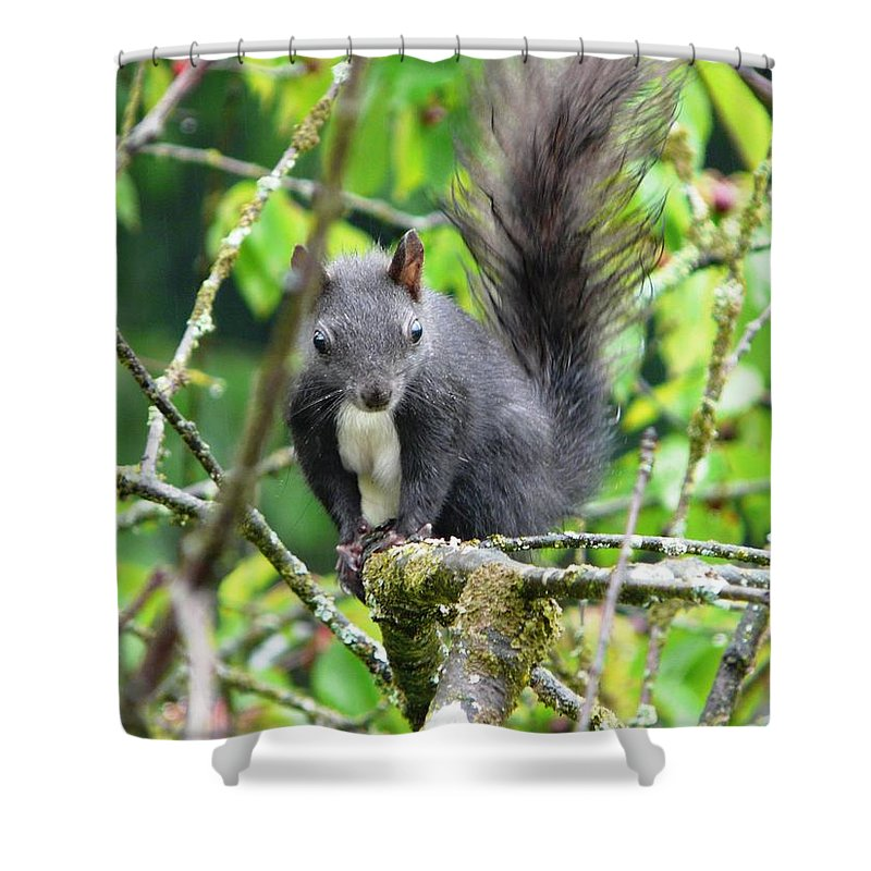 Animal Shower Curtain featuring the photograph Black Squirrel In The Cherry Tree by Valerie Ornstein