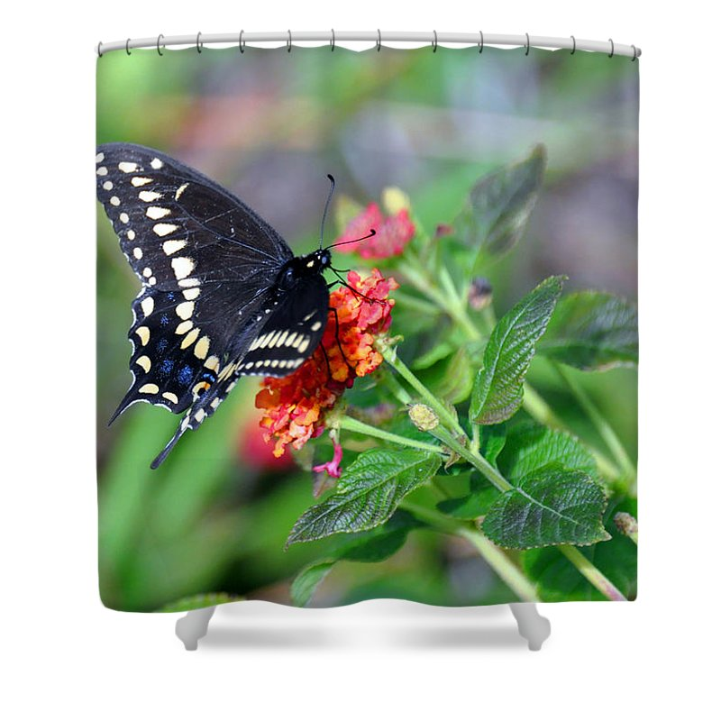 Butterfly Shower Curtain featuring the photograph Black Swallowtail by Kay Lovingood