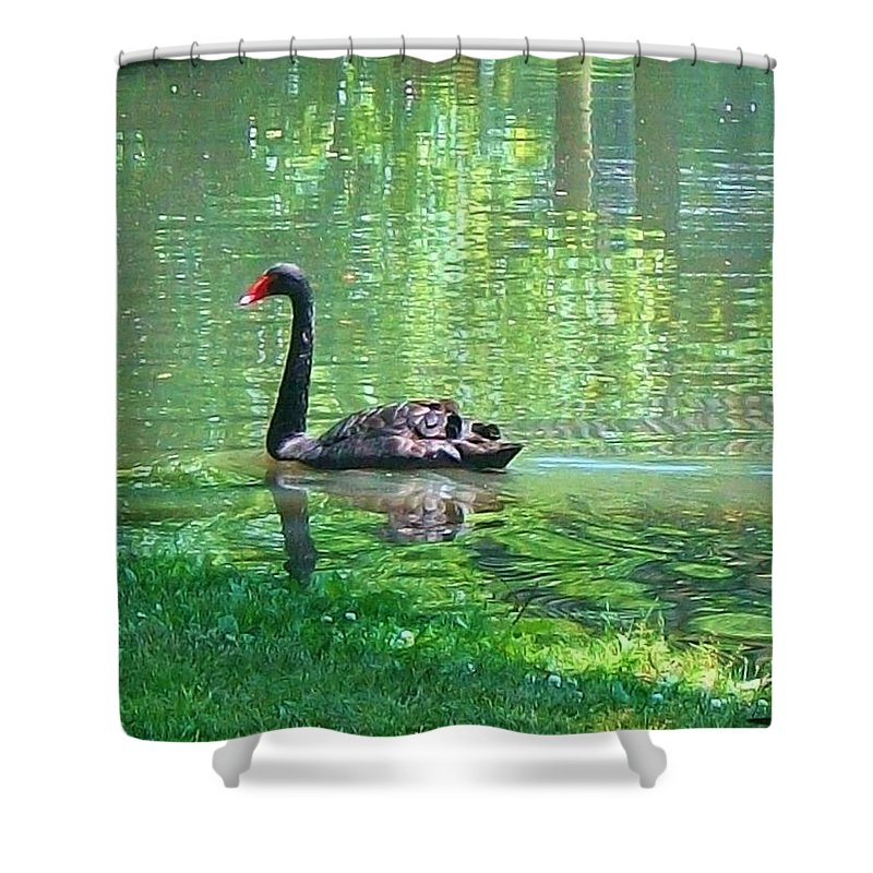 Black Swan Shower Curtain Featuring The Painting Swim In A Pond By Robin Cordero