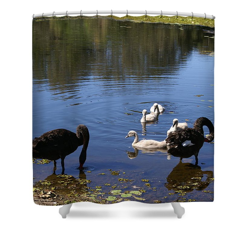 Bird Shower Curtain featuring the photograph Black Swan's by Brian Leverton