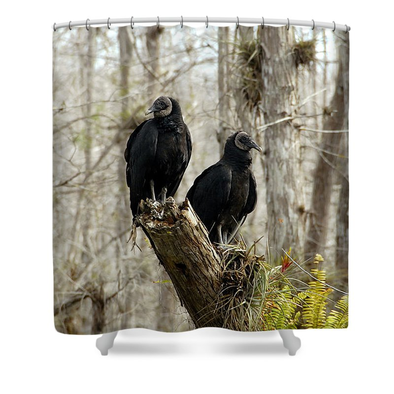 Black Vultures Shower Curtain featuring the photograph Black Vultures by David Lee Thompson