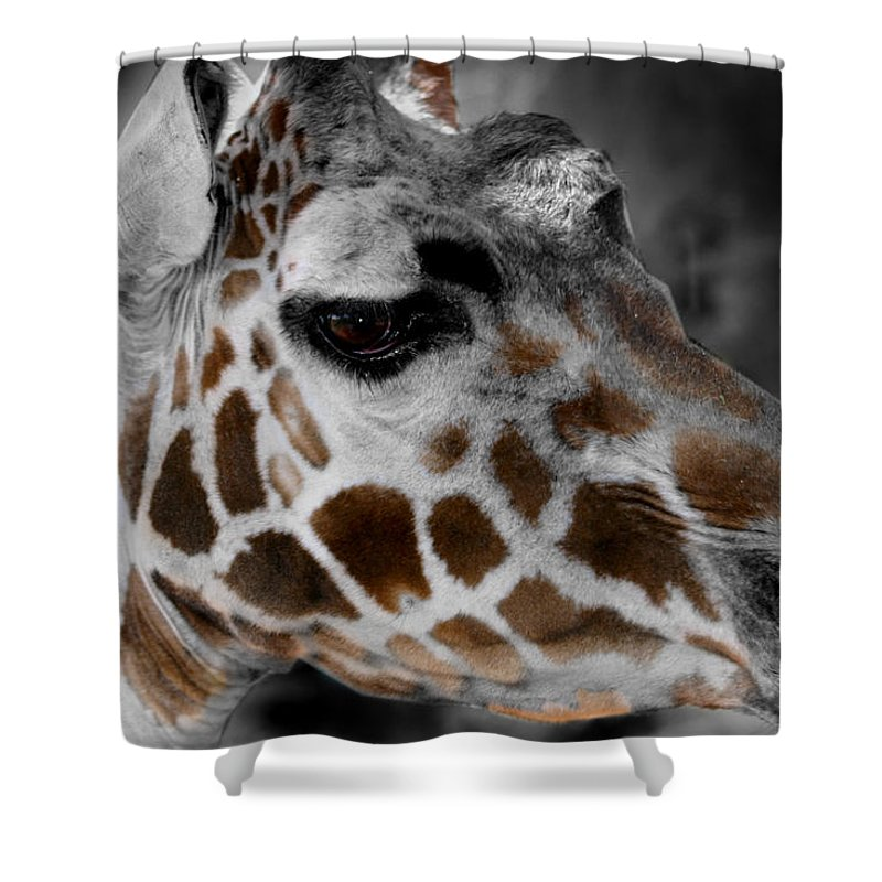 Giraffe Shower Curtain featuring the photograph Black White And Color Giraffe by Anthony Jones