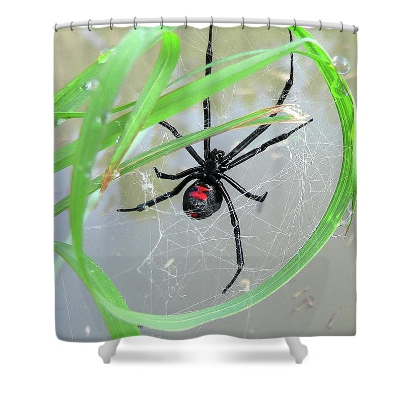 Spider Shower Curtain featuring the photograph Black Widow Wheel by Al Powell Photography USA