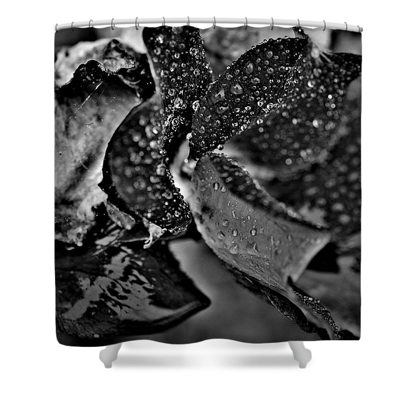 Rose Shower Curtain featuring the photograph Blackout by Paul Gavin