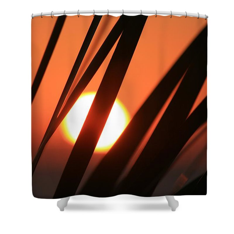 Sun Shower Curtain featuring the photograph Blazing Sunset And Grasses by Nadine Rippelmeyer