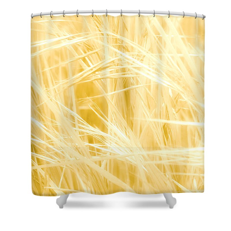 Calm Shower Curtain featuring the photograph Blonde Summers by Steve Taylor