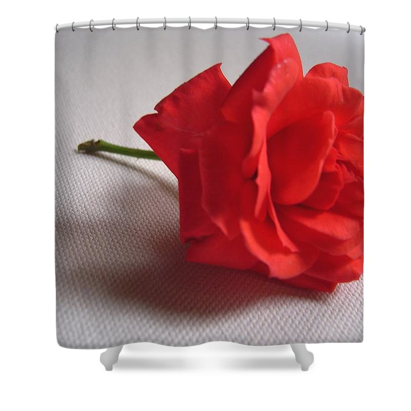 Blood Shower Curtain featuring the photograph Blood Red Rose by Usha Shantharam