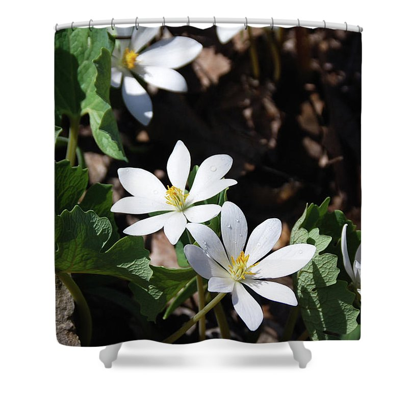 Flowers Shower Curtain featuring the photograph Bloodwart 1115 by Guy Whiteley