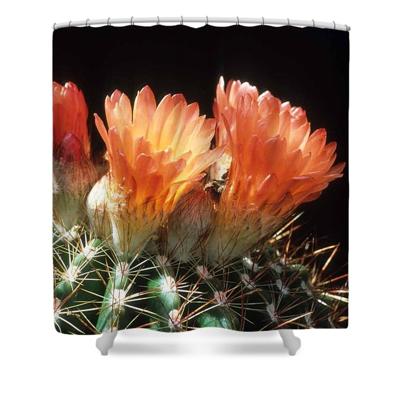 Barrel Cactus Shower Curtain featuring the photograph Bloomin' Barrel by Laurie Paci