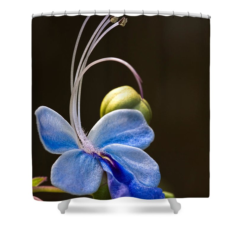 Flower Shower Curtain featuring the photograph Blooming Butterfly by Christopher Holmes