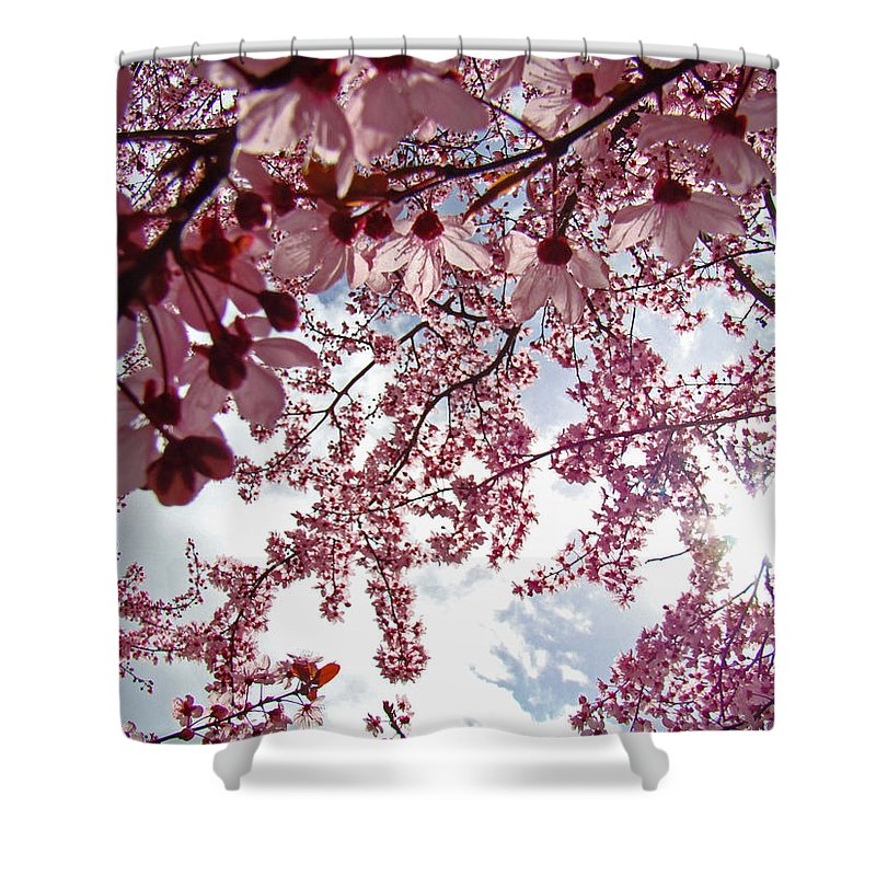 Tree Shower Curtain featuring the photograph Blossom Artwork Spring Flowers Art Prints Giclee by Baslee Troutman