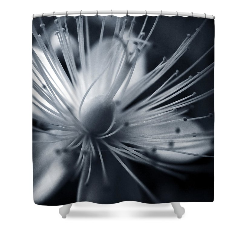 Art Shower Curtain featuring the photograph Blossom by Dorit Fuhg