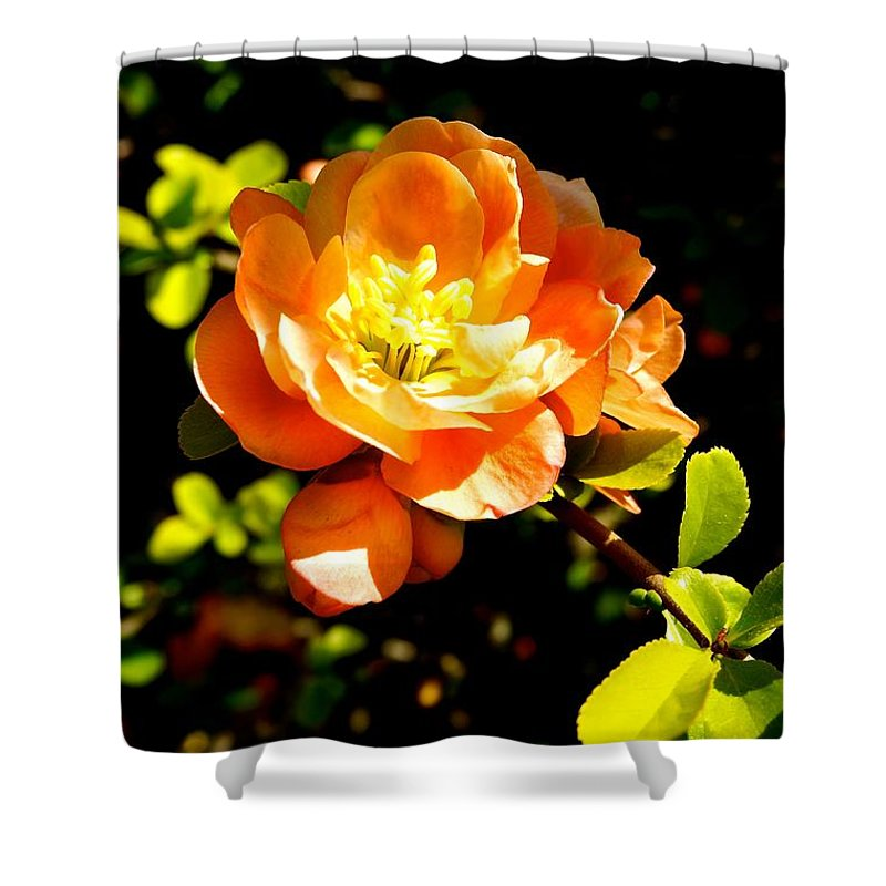 Flower Shower Curtain featuring the photograph Blossom by Ivana Kovacic