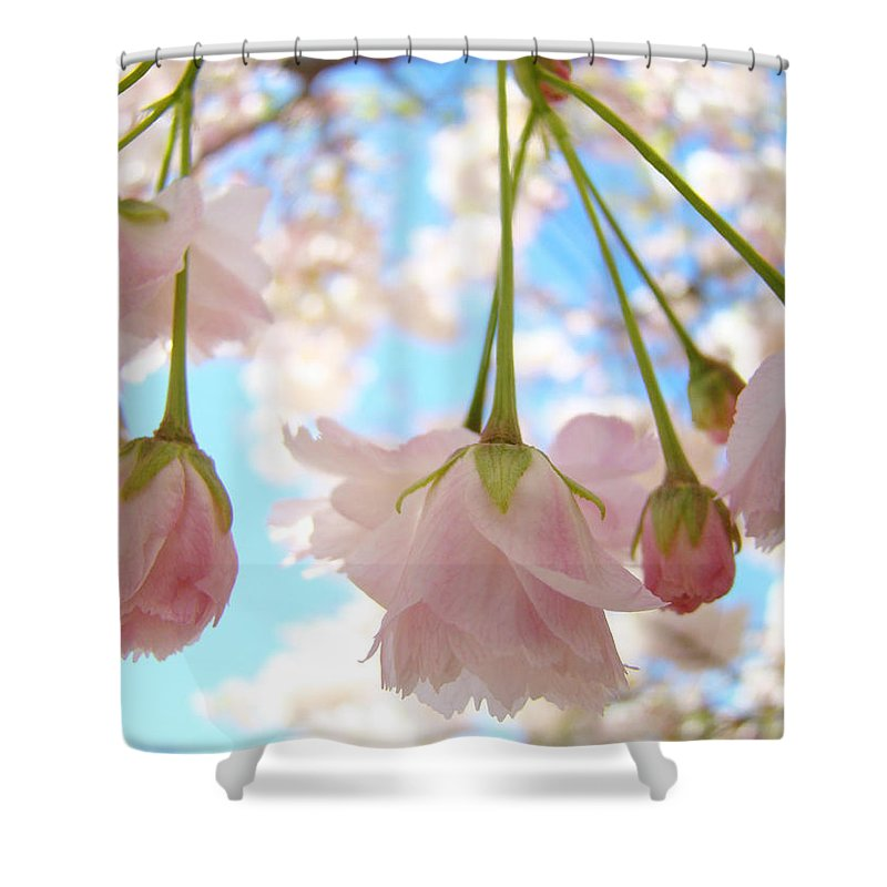 �blossoms Artwork� Shower Curtain featuring the photograph Blossoms Art Prints 52 Pink Tree Blossoms Nature Art Blue Sky by Baslee Troutman