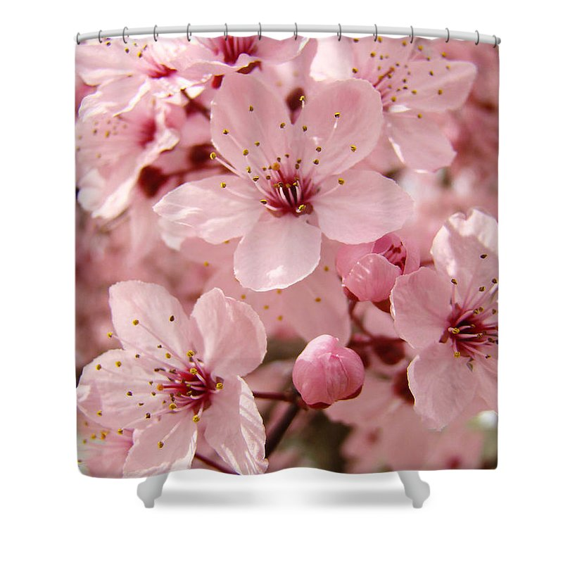 Nature Shower Curtain featuring the photograph Blossoms Art Prints 63 Pink Blossoms Spring Tree Blossoms by Baslee Troutman
