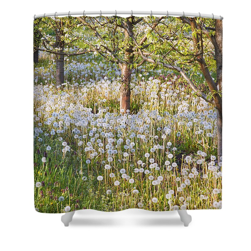 Flower Shower Curtain featuring the photograph Blossoms Growing In A Fruit Orchard In by Craig Tuttle