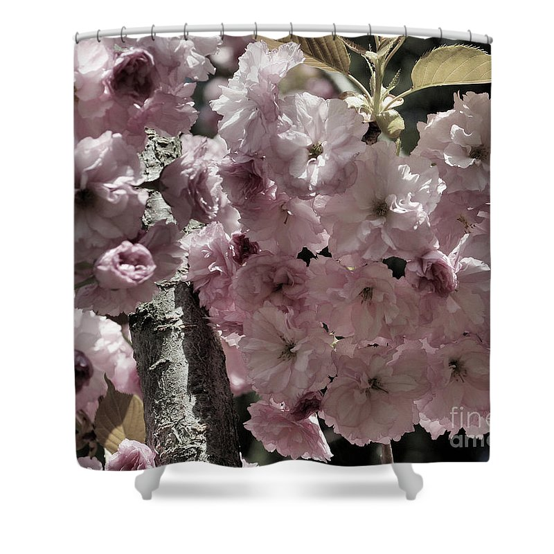 Flower Shower Curtain featuring the photograph Blossoms by Smilin Eyes Treasures