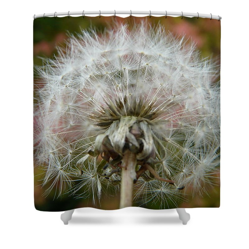 Blowball Shower Curtain featuring the photograph Blowball 2 by Valerie Ornstein