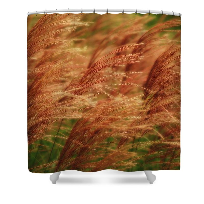 Win Shower Curtain featuring the photograph Blowing In The Wind by Gaby Swanson