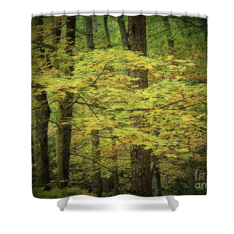 Smoky Mtns Shower Curtain featuring the photograph Blowing In The Wind by Stanton Tubb