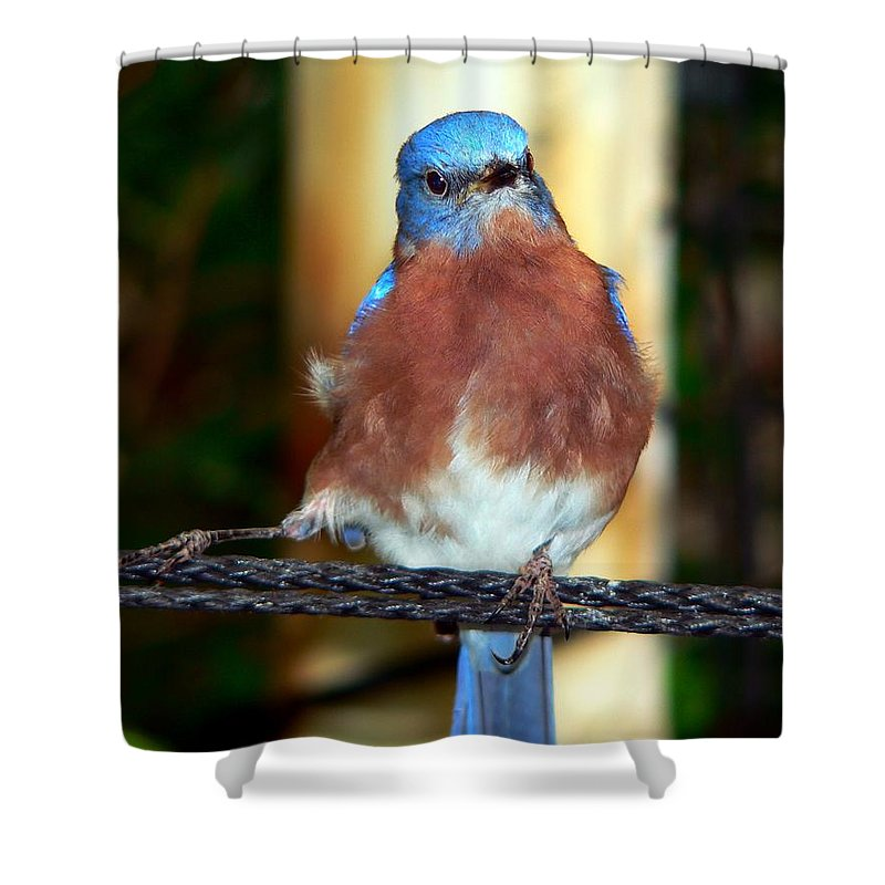 Tanager Shower Curtain featuring the photograph Blue And Brown Tanager by RiaL Treasures
