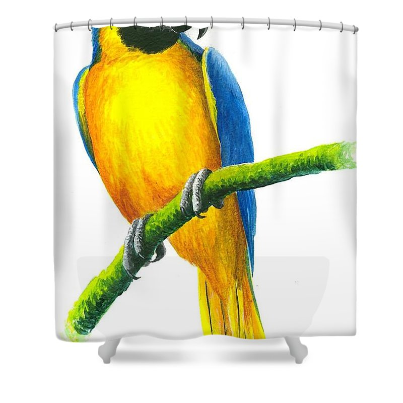 Chris Cox Shower Curtain featuring the painting Blue And Gold Macaw by Christopher Cox