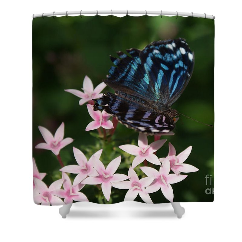 Butterfly Shower Curtain featuring the photograph Blue And Pink Make Lilac by Shelley Jones