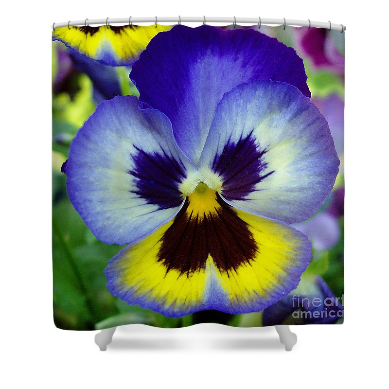 Flowers Shower Curtain featuring the photograph Blue And Yellow Pansy by Nancy Mueller