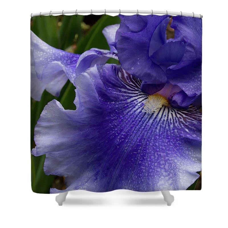Jean Noren Shower Curtain featuring the photograph Blue Bearded Iris by Jean Noren