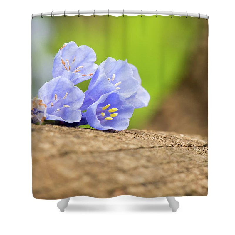 Blue Bell Flowers Shower Curtain featuring the photograph Blue Bells 2 by Norberto Nunes