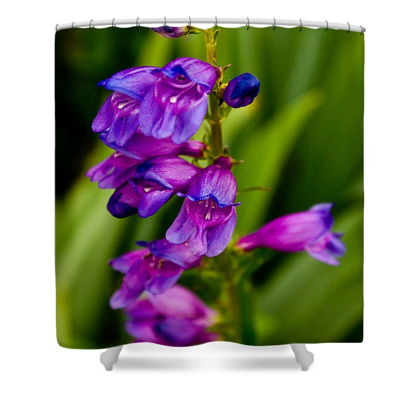 Shower Curtain featuring the photograph Blue Bells Wild Flower by James Gay