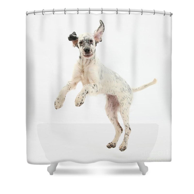 Dog Shower Curtain featuring the photograph Blue Belton English Setter by Mark Taylor