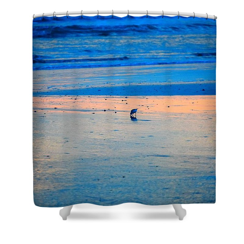 Photography Shower Curtain featuring the photograph Blue Bird by Adela Hittell