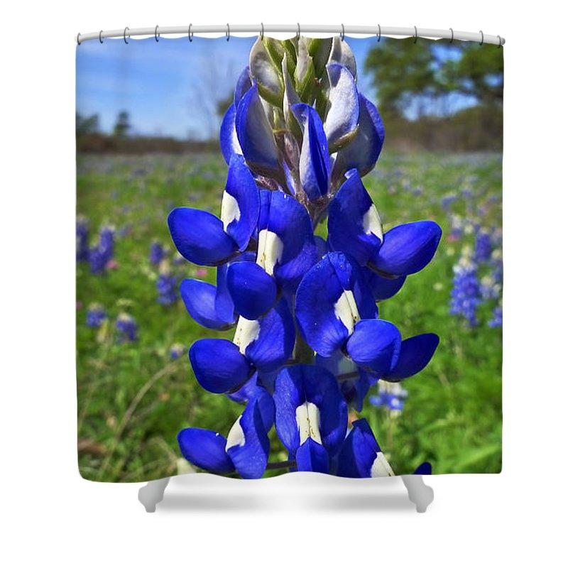 Blue Bonnet Shower Curtain featuring the photograph Blue Bonnet by Skip Hunt