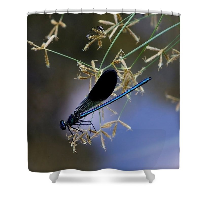 Damsfly Shower Curtain featuring the photograph Blue Damsfly by Cliff Norton