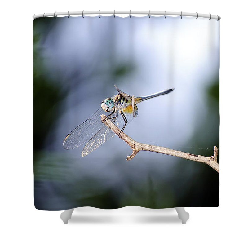 Dragonfly Shower Curtain featuring the photograph Blue Dasher Dragonfly by Kenneth Albin