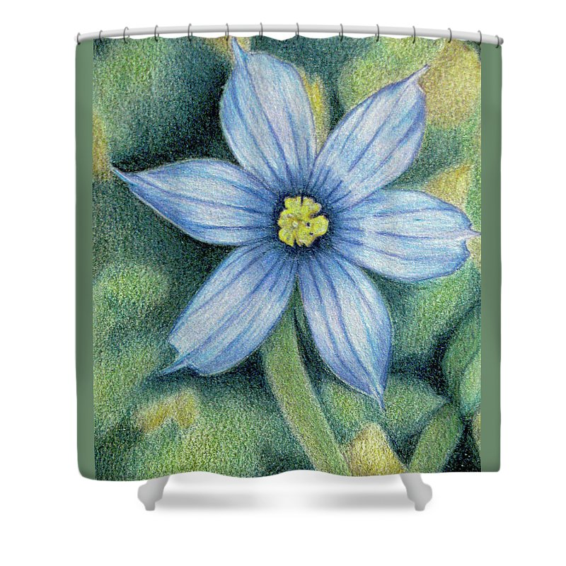 Fuqua - Artwork Shower Curtain featuring the drawing Blue Eyed Grass - 1 by Beverly Fuqua