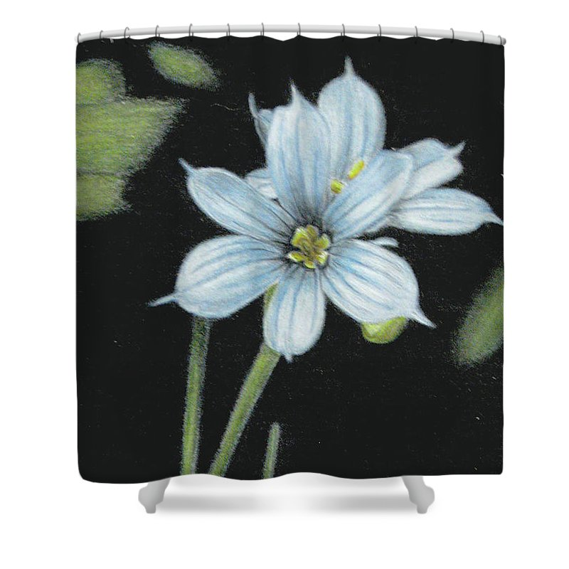 Fuqua - Artwork Shower Curtain featuring the drawing Blue Eyed Grass - 2 by Beverly Fuqua