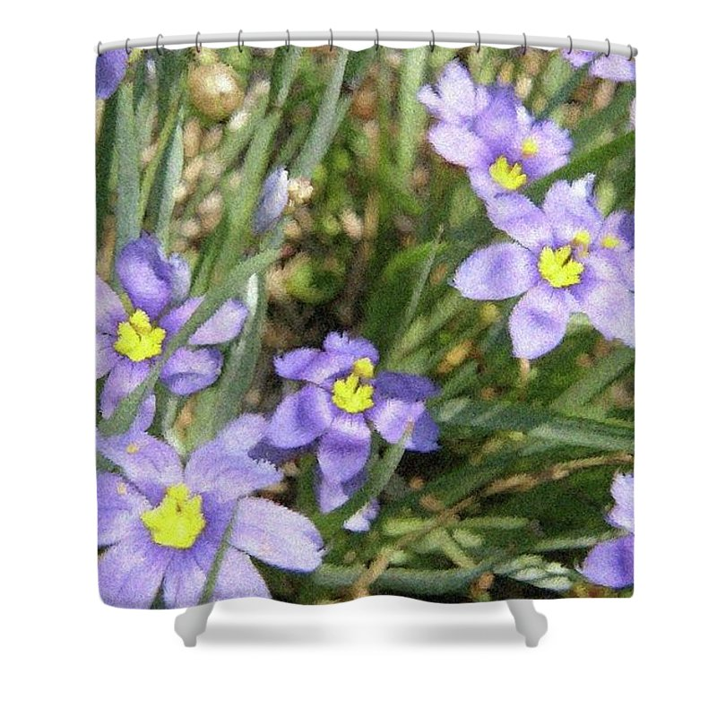 Spring Shower Curtain featuring the digital art Blue Eyed Grass by Amber Stubbs