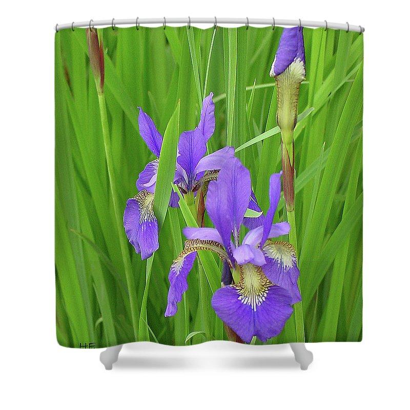 Sunlight Shower Curtain featuring the photograph Blue Flag Iris-1 by Shirley Heyn