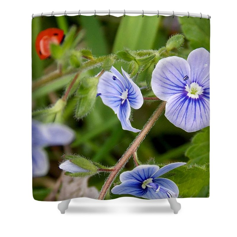 Flower Shower Curtain featuring the photograph Blue Flower by Olja Simovic