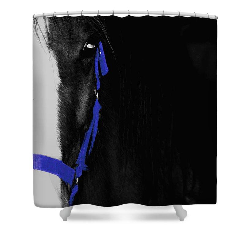 Horse Shower Curtain featuring the photograph Blue Halter by Hannah Breidenbach